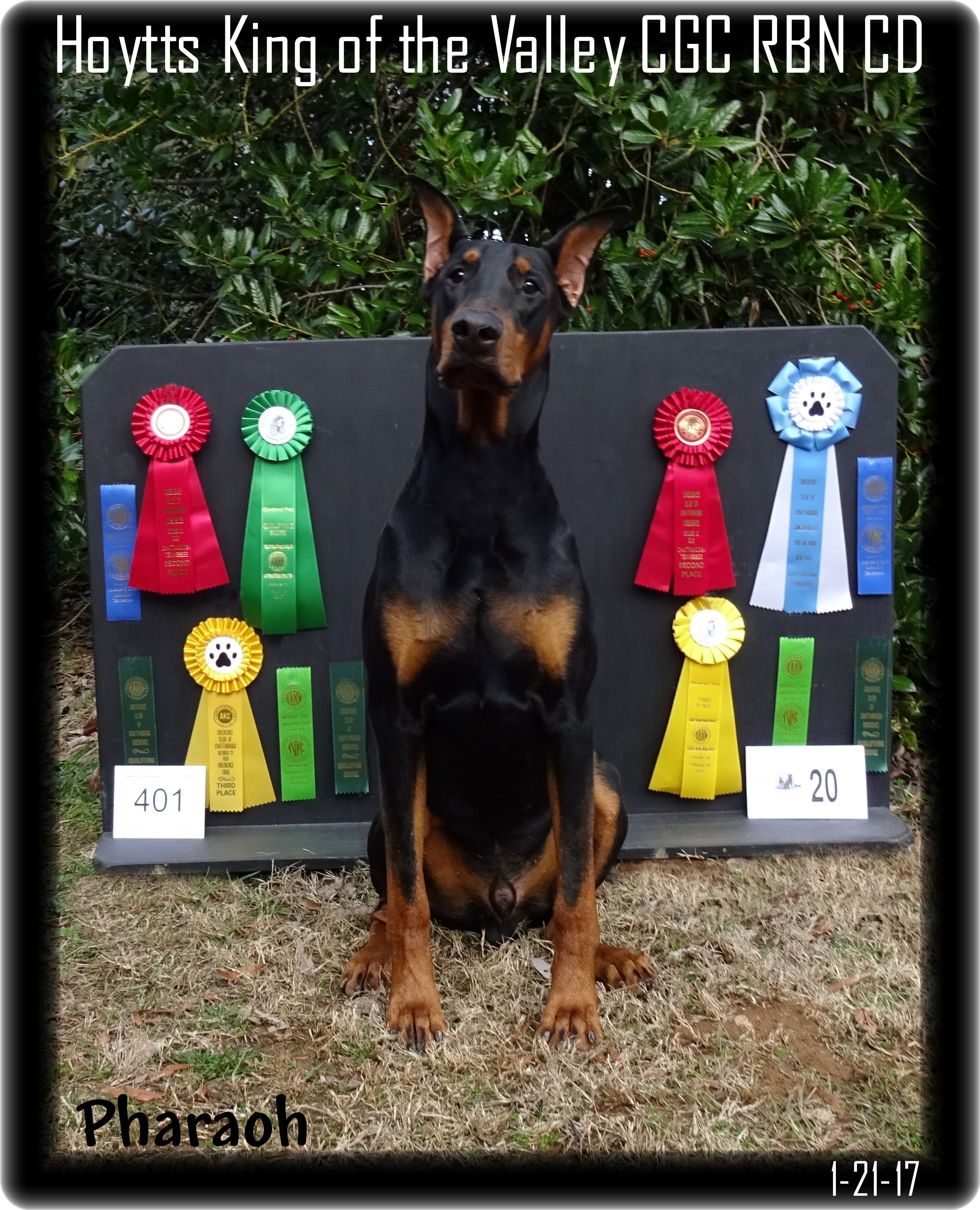 w-pharaoh-with-his-wins-012.jpg